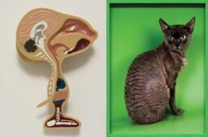 David Musgrave, Animal (1997) [left];  Elad Lassry, Devon Rex. 2011 [right].